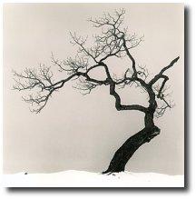les japonais et la mort mon trek au japon. Black Bedroom Furniture Sets. Home Design Ideas